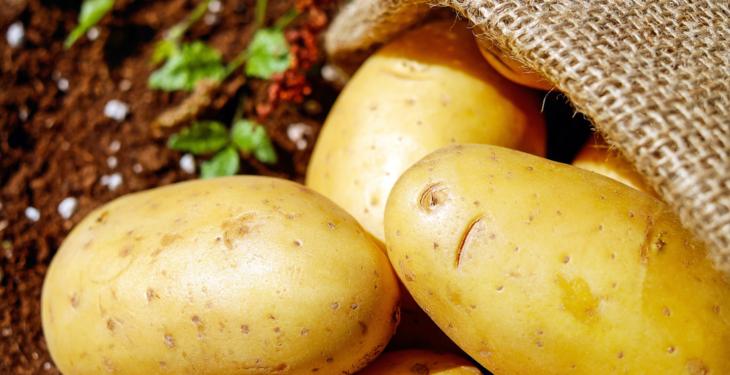 Nyplukkede poteter