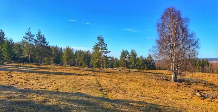 Kulturlandskap Bergajordet på Namnå