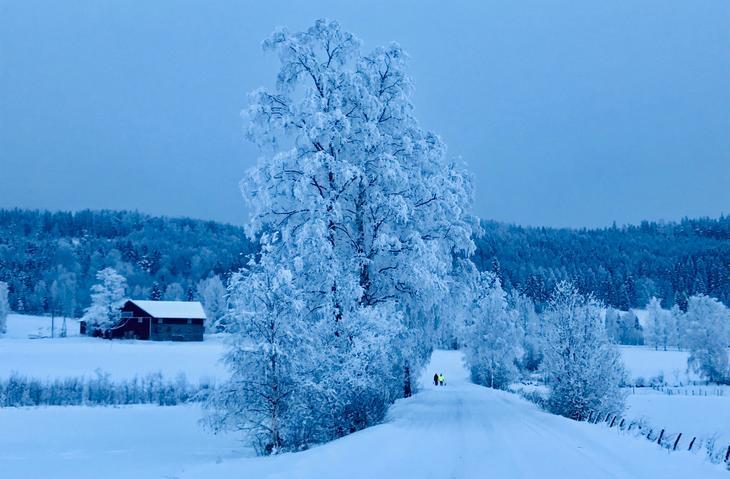 Ingelsrud i vinterskrud