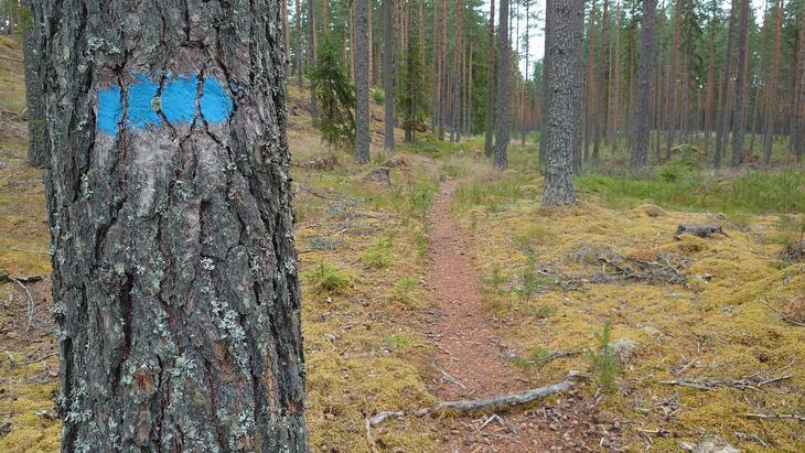 Blåmerket sti til Larssonkoia